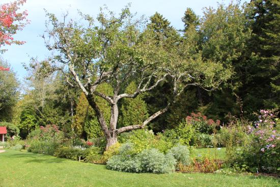 Mount Desert, ME: Garden in October