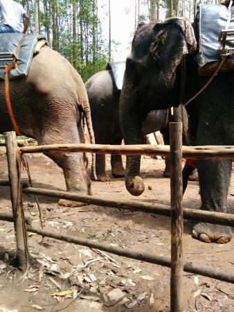 Carmelagiri Elephant Park