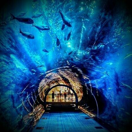 ???????? Lost Chambers - Picture of The Lost Chambers Aquarium ...