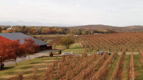 Barboursville Vineyards in fall leaf season