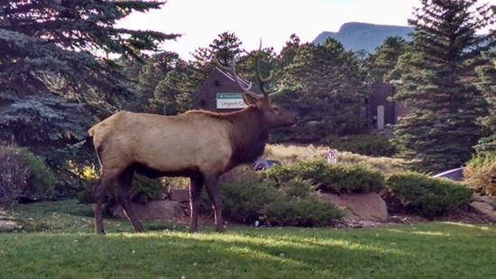 Blackhawk Lodges: Elk Right Outside Your Door