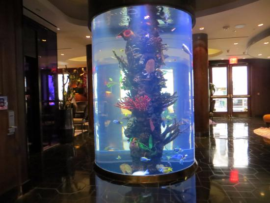 The great fish tank in the lobby picture of dream for Fish hotel tank