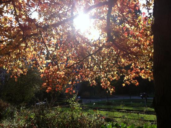 jardin des plantes les couleurs dautomne du liquidambar - Jardin Des Plantes Caen