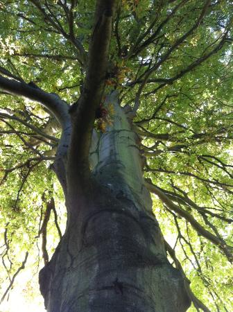 Un arbre s culaire picture of jardin des plantes caen for Acheter un composteur de jardin