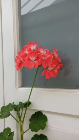 Mansion Arechiga: Lo único bonito del hotel fueron las flores de una planta que adornaban la ventana y la segunda