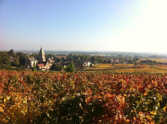 Burgundia Tour: Dans les vignes de Fixin