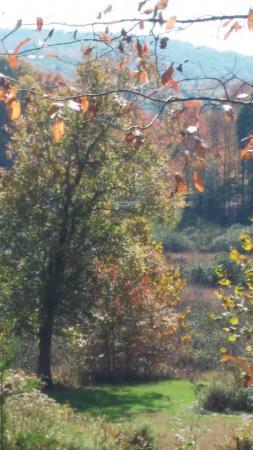 West Virginia Botanic Garden: October 2015