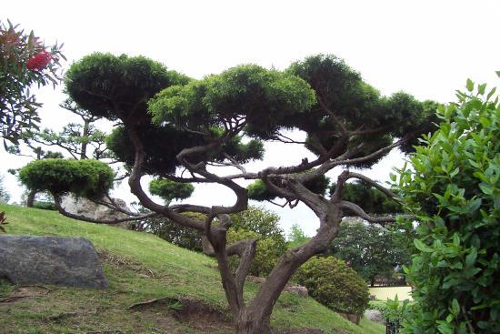 Jardin japones picture of jardin japones buenos aires for Jardin japones