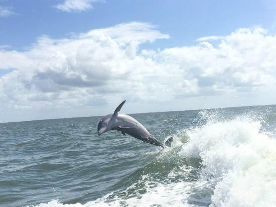 Boca Grande, FL: Dolphon jumping right next to the boat