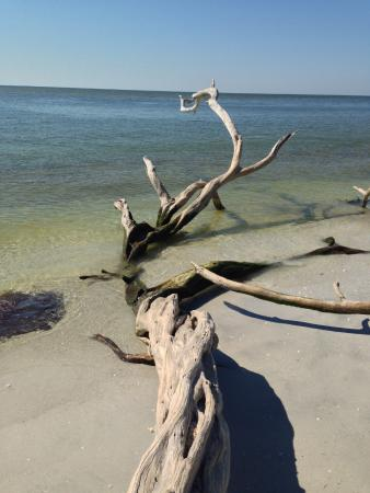Boca Grande, FL: wood in water