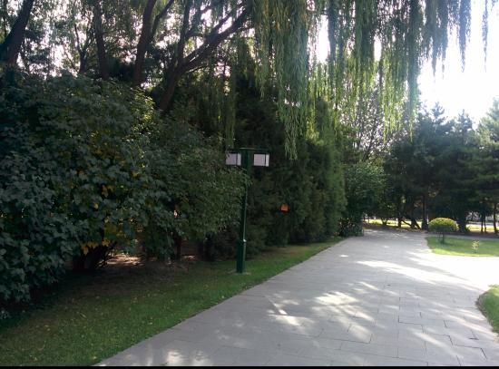 Xincheng Hotel: garden