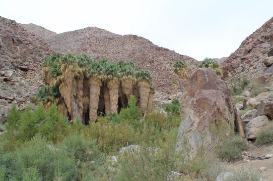 Borrego Valley Inn: Palm Canyon hike 10 mins from the hotel.