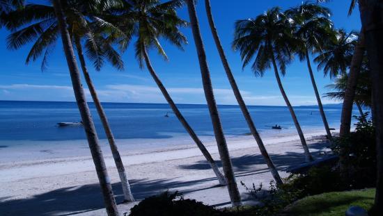 Anda White Beach Resort: Beach Front