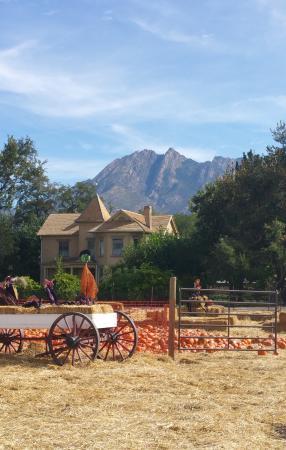 wheeler historic farm getting ready for halloween - Wheeler Farm Halloween