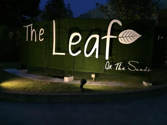 The Leaf on The Sands Photo