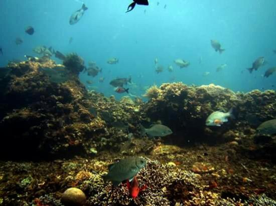 Bali Indah Dive & Water Sports