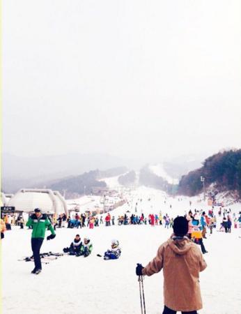 Bears Town - Ski/Sled