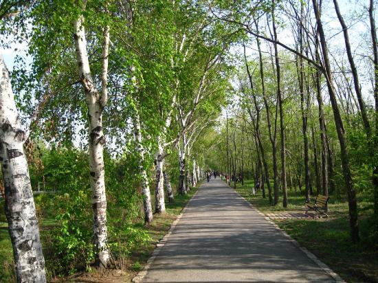 哈尔滨森林公园