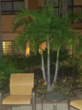 Courtyard St. Petersburg Clearwater: 20151023_234127_large.jpg