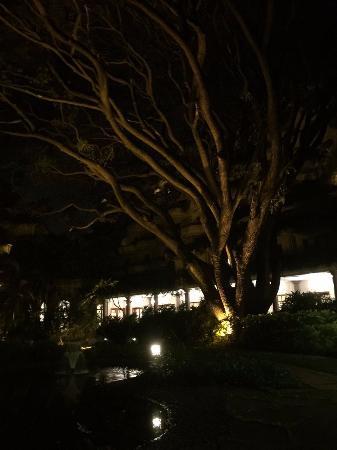 raintree in the garden