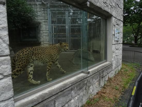 photo0.jpg - Picture of Tama Zoological Park, Hino - TripAdvisor