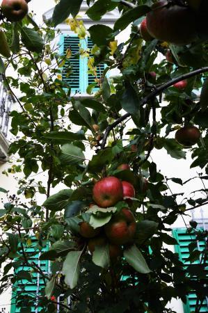 Ronta, İtalya: giardino