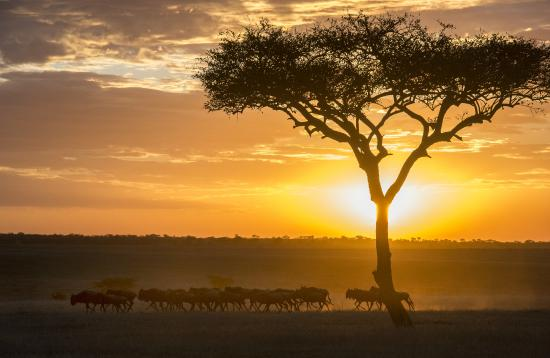 Serengeti Safari Camp, Nomad Tanzania: All about the migration.