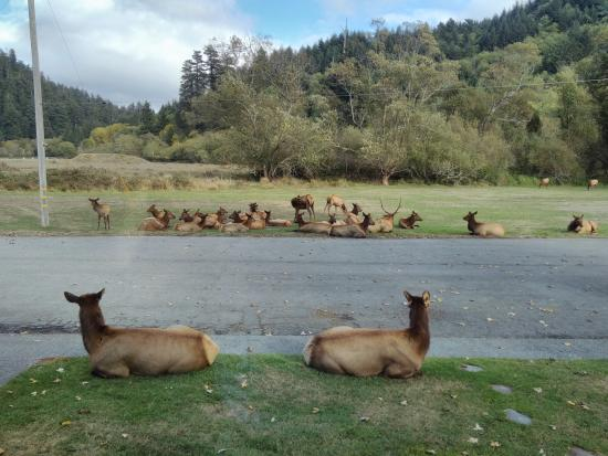 Elk Meadow Cabins: Nap time.