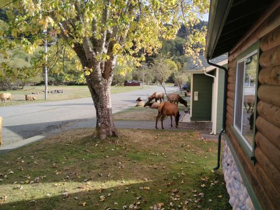 Elk Meadow Cabins: Here they come.