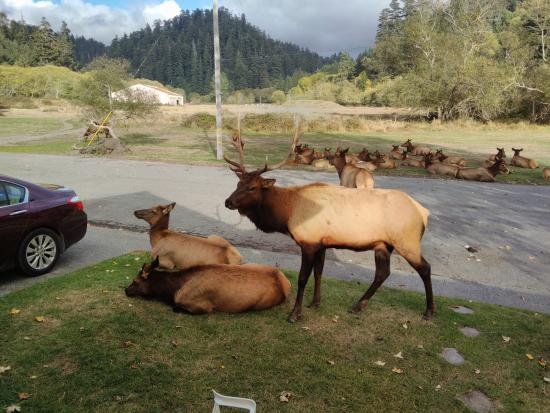Elk Meadow Cabins: Guess who's in charge.