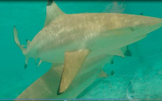 Mata Tours: Swimming with sharks