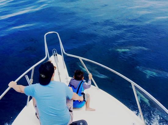 Dana Point, Καλιφόρνια: Up close with a pod of common dolphins