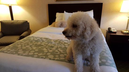 Red Roof Inn Hartford - New Britain: pet friendly room