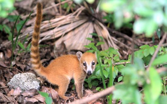 Parque Urbano Kabah: Convive con animalitos de la región