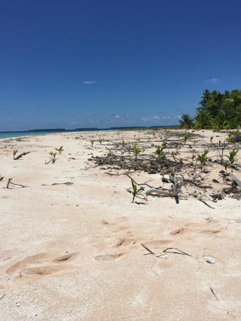 Funafuti Marine Conservation Area: Faugea islet lost part of its vegetation due to cyclone Pam