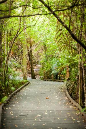 Sheltered bush walks