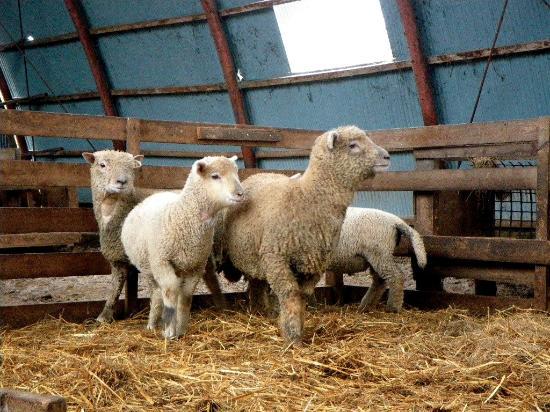 Ishida Sheep Farm