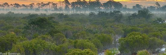 Venus, فلوريدا: Scrubland of the Lake Wales Ridge Archbold Station Venus Fl.
