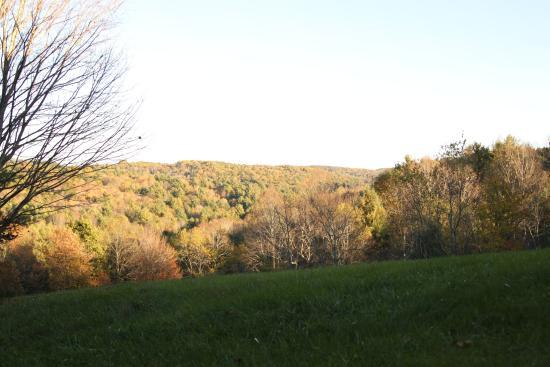 Willis, VA: View