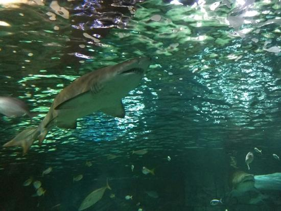 A Tour Of The Sydney Acquarium Is So Interesting There39s Thousands Of Di