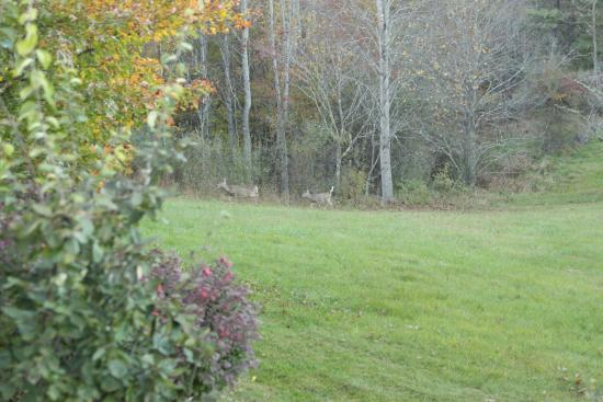 Willis, VA: Deer sighting!