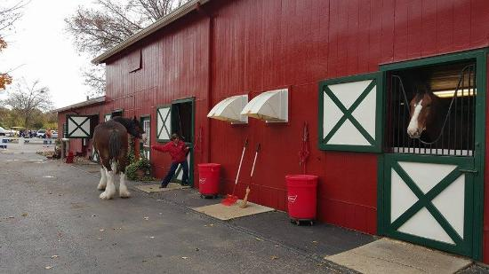Budweiser Clydesdale Barn Picture Of Grant S Farm Saint