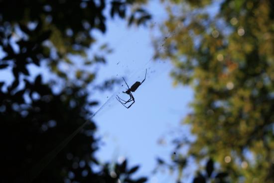 Ibera Wetlands, Argentina: Insectos abundantes por el clima