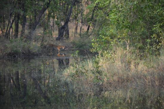 magdhi national park Bandhavgarh national park is a popular national park of khitauli and magdhi total area of the park is 694 km sq and the title of national park belongs to tala.