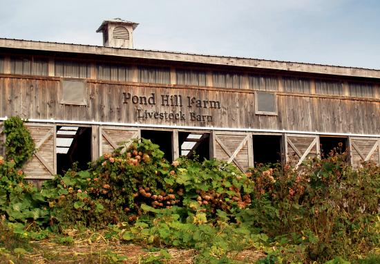 Disappointing Review Of Pond Hill Farm Harbor Springs Mi Tripadvisor