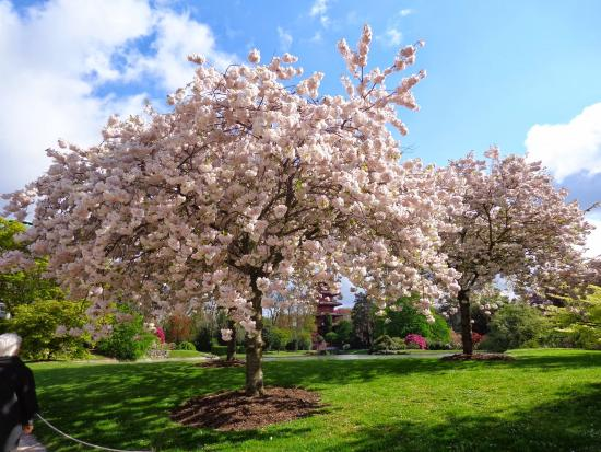 Serres Royales De Laeken: Alles stond prachtig in bloei !