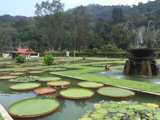 槟城植物园