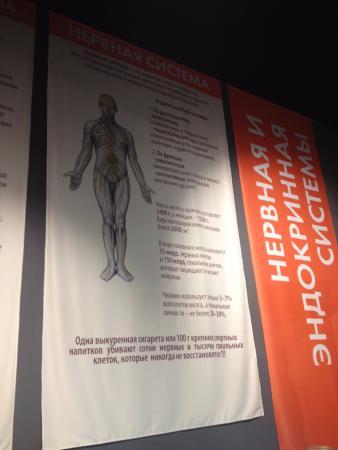 Man's Body Exhibition Center