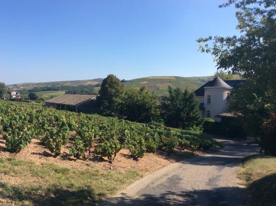 Chateau des Loges : vignes derrière le château