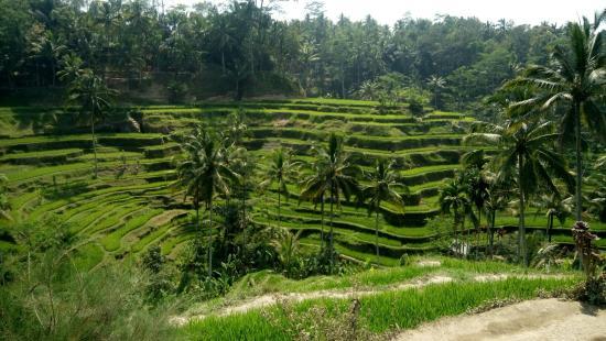Holy Bali Tour - Day Tours